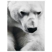 Polar Bear Printed Canvas - $62.99 ($27.00 Off)