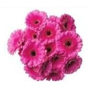 Mini Gerbera Bouquet - $11.99